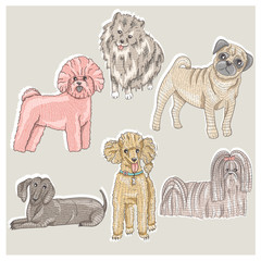 Set of cute little breed dogs. Bichon, pug, spitz, dachshund, po