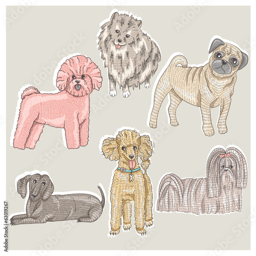 Set of cute little breed dogs. Bichon, pug, spitz, dachshund, po