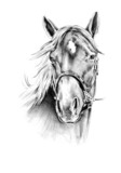 freehand horse head pencil drawing - 63024024