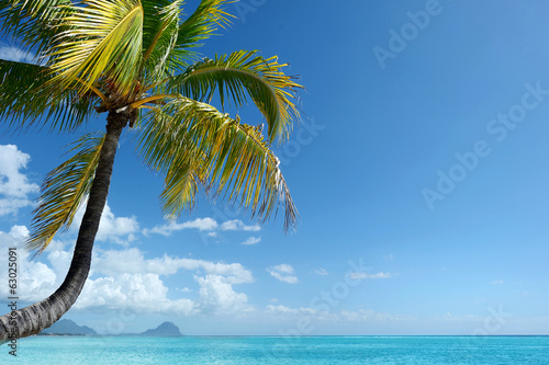 Tropical beach with a palm tree