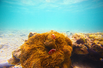 Corals, clownfish and palm island - half underwater shoot. Thai