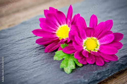 canvas print picture Blumen auf Schiefer