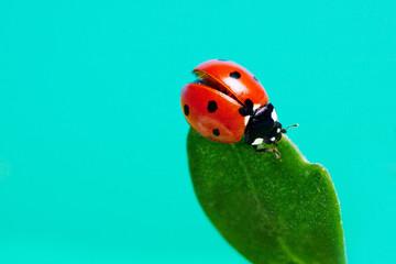 Ladybird on a green leaf against the sky.