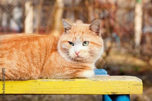 portrait of bright red cat with green eyes, resting in the sun