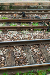 Rotaie di binari ferroviari, Ferrovia dei treni