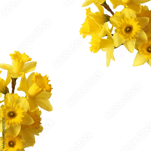 Fotobehang Narcis narcissus bouquet isolated on white
