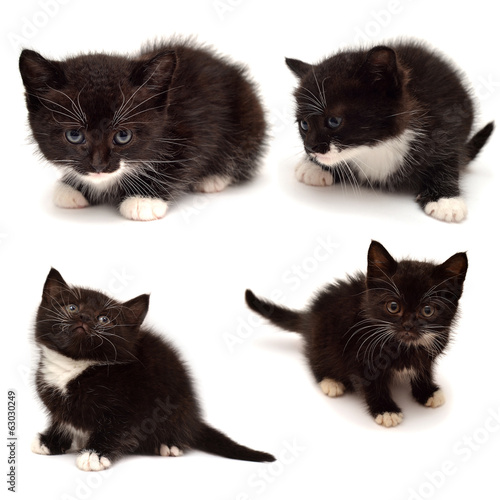 Collection of small kitten