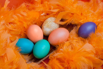 Easter eggs on orange feather