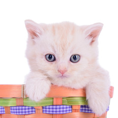 red kitten in basket