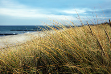 Seegras auf Düne an Ostsee