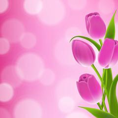 Border Of Tulips