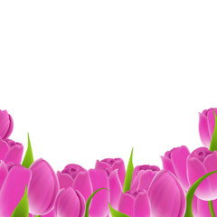 Frame Of Pink Tulips