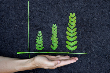 Hands holding tree arranged as a green graph on soil background