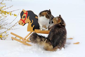 Die Katzen und das Schaukelpferd