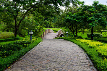 Pedestrian walkway for exercise with trees in park