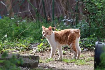 庭を歩く仔猫
