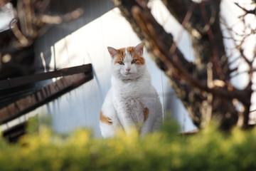 屋根に上った猫