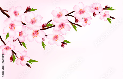 Spring background of a blossoming tree branch with spring flower