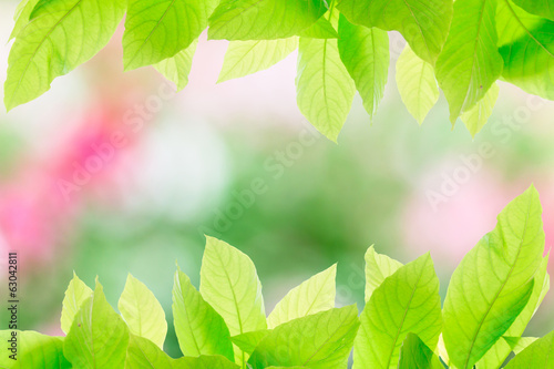 Green leaves on abstract blur background texture