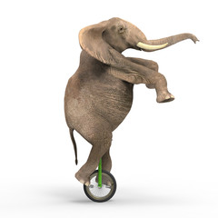Elephant riding a unicycle
