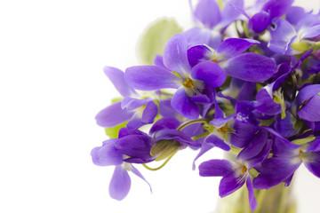 Violet flowers bouquet