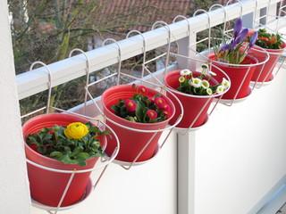 Frühblüher auf dem Balkon