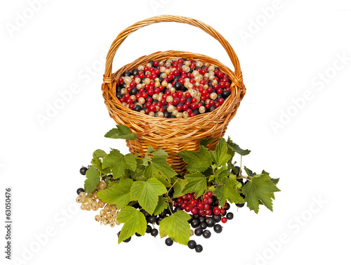 Still life with currant berries in the basket