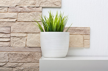 Room interior with stone wall andand green plant on white shelf
