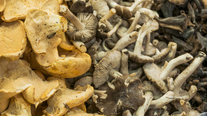 Barcelona, Markt, Gemüsemarkt, Marktstand, Spanien