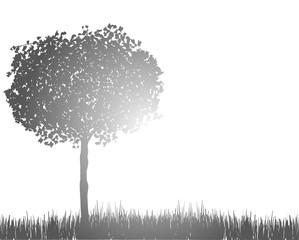 silhouette di albero sul prato