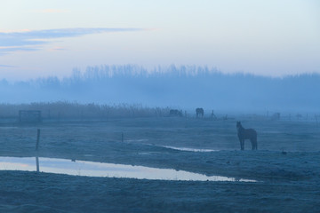 Countryside with animals before sunrise.