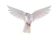 """Постер, картина, фотообои """"flying dove"""""""