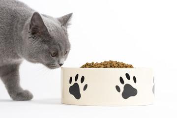 Katze beim Fressen / Trockenfutter für Katzen