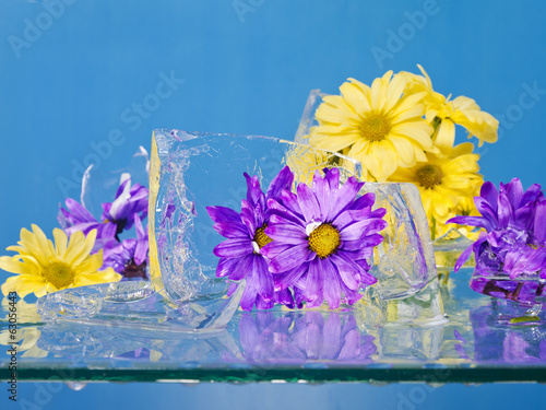 Flowers Frozen in Ice