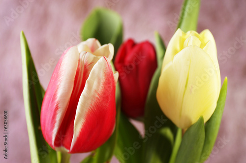 Beautiful tulips on color background