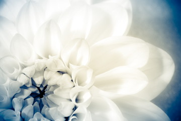 Flower, photo in vintage style