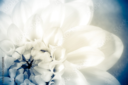 Foto op Plexiglas Retro Flower, photo in vintage style