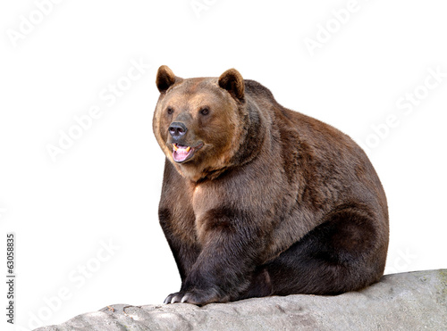 Brown bear isolated on white