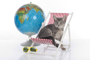 Cat on holidays isolated