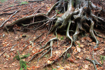 apparato radicale di alberi in stagione invernale
