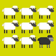 Group Of  White Sheep And A Black Sheep