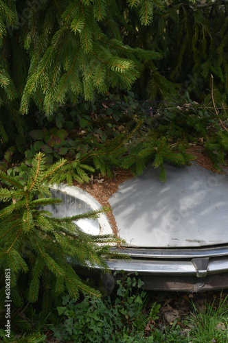 Old Car under a Tree