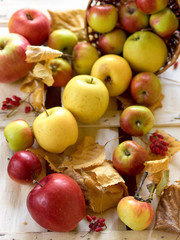 Fresh harvest of red and golden apples on wooden background
