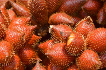 Zalacca wallichiana