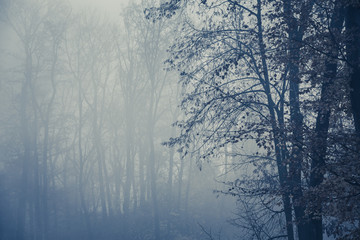 Foggy forest with trees in foreground, copy space