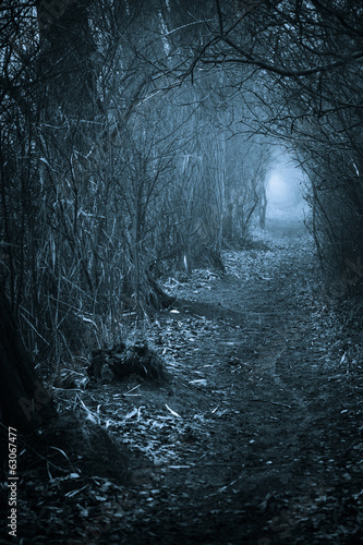 Dark spooky passage through the forest
