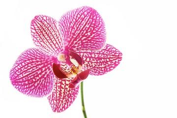 Flower orchids