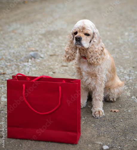 Cocker spaniel and shopping bag