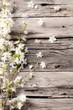 canvas print picture - Spring white blossoms on wooden planks