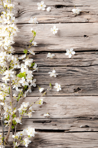 canvas print picture Spring white blossoms on wooden planks